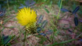 Härlig färgrik blomma Arkivfoto