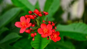 Härlig färgrik blomma Royaltyfri Fotografi