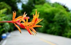 Härlig färgrik blomma Royaltyfria Bilder