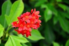 Härlig färgrik blomma Royaltyfri Foto