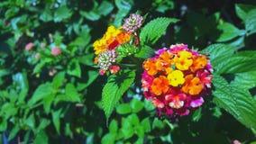 Härlig färgrik blomma i närbild royaltyfri bild