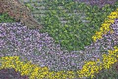 Härlig färgrik blommamodell på väggbakgrunden i Shanghai Fotografering för Bildbyråer