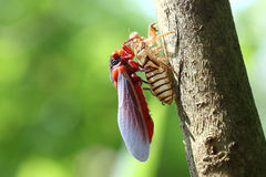 Härlig färgrik fjäril i natur Royaltyfria Bilder