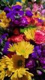 Härlig färgrik grupp av blommor royaltyfria foton