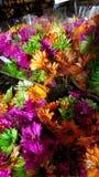 Härlig färgrik grupp av blommor royaltyfria bilder