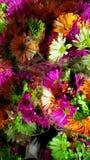 Härlig färgrik grupp av blommor arkivbild