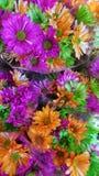 Härlig färgrik grupp av blommor arkivfoto