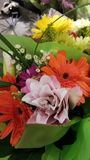 Härlig färgrik grupp av blommor royaltyfri bild