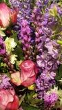 Härlig färgrik grupp av blommor arkivfoton
