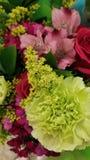 Härlig färgrik grupp av blommor royaltyfri fotografi