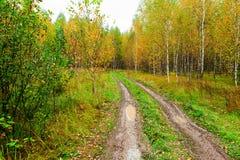 Härlig färgrik höstskog Royaltyfri Bild