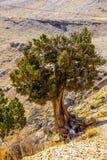 Härlig färgrik natur Fotografering för Bildbyråer