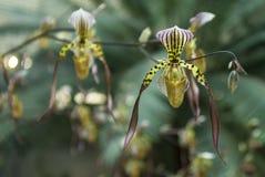 Härlig färgrik orkidé i blom Arkivfoto