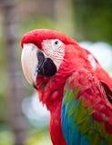 härlig färgrik papegoja arkivbild