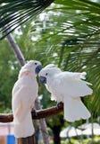 härlig färgrik papegoja arkivbilder