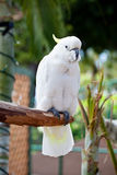 härlig färgrik papegoja arkivfoton