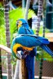 härlig färgrik papegoja Royaltyfria Foton