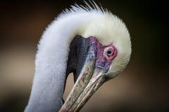 härlig fågel Royaltyfria Foton