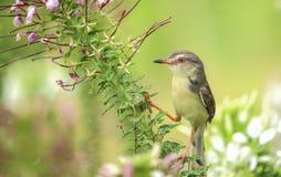 Härlig fågel på träd Royaltyfria Foton