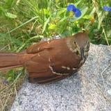 Härlig fågel utanför Royaltyfria Bilder