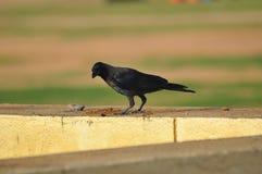 Härlig fågelbild arkivbilder