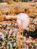 Härlig för bakgrundstapet för vit blomma bild av Indien arkivfoto