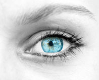 härlig för illustrationvektor för blått öga kvinna arkivbild