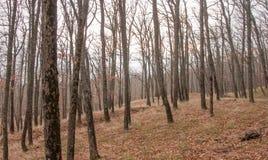 Härlig felik höstskog i bergen Arkivfoton