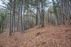 Härlig felik höstskog i bergen Arkivfoto