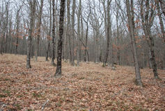 Härlig felik höstskog i bergen Royaltyfri Foto