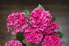 Härlig festlig gåvabukett av rosa vanliga hortensior på en träbakgrund arkivfoton