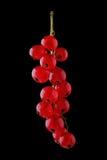 Härlig filial av den mogna saftiga vinbäret på en svart bakgrund Röda mogna vinbär på en mörk bakgrund Smaklig röd och mogen vinb Royaltyfri Fotografi