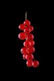 Härlig filial av den röda och saftiga vinbäret på en svart bakgrund Närbildmakrovinbär på svart bakgrund Röd och mogen vinbär Arkivbilder