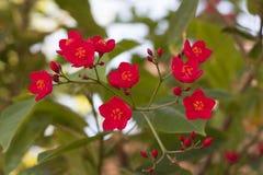 Härlig filial med det röda blommafotoet royaltyfri bild