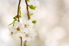 härlig fin tidig blommafjäder Arkivfoto