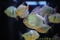 Härlig fisk. Fotografering för Bildbyråer