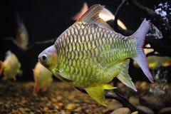 Härlig fisk. Arkivfoto