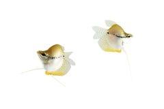 härlig fisk Arkivfoto
