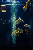 härlig fisk Fotografering för Bildbyråer