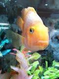 härlig fisk Royaltyfria Bilder