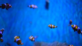 Härlig fisk i akvariet lager videofilmer