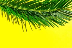 Härlig fjäderlik grön palmblad på vibrerande gul väggbakgrund Tropiskt id?rikt begrepp f?r sommar Stads- djungelhouseplants royaltyfri bild