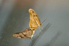 härlig fjäril Arkivbilder