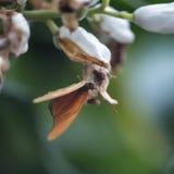 Härlig fjäril för nymphalidae för Julia fjärilslepidoptra på ye Arkivfoto