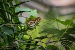 Härlig fjäril, grönt blad som omges av lövverk, grön bakgrund arkivfoto