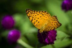 Härlig fjäril i trädgården Arkivfoto