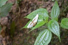 Härlig fjäril i tropiskt skogsammanträde på gröna sidor royaltyfri fotografi