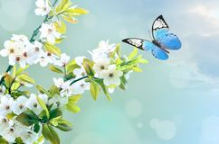 Härlig fjäril på den vita blomman, himmelbakgrund arkivfoton