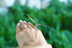 Härlig fjäril på en flickas hand Royaltyfri Foto