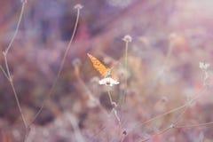 Härlig fjäril på ett grässtrå i skogen sagolik toning och mjuk fokus royaltyfri bild